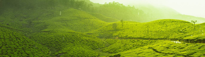 Birchall Fairtrade Tea title image