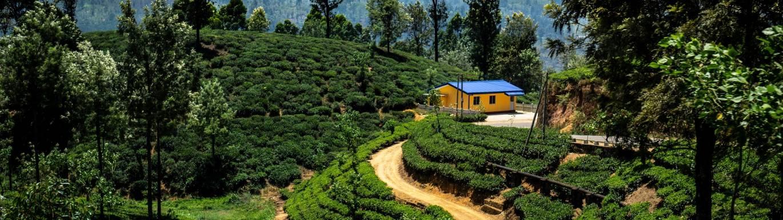 Fairtrade Catering Tea title image