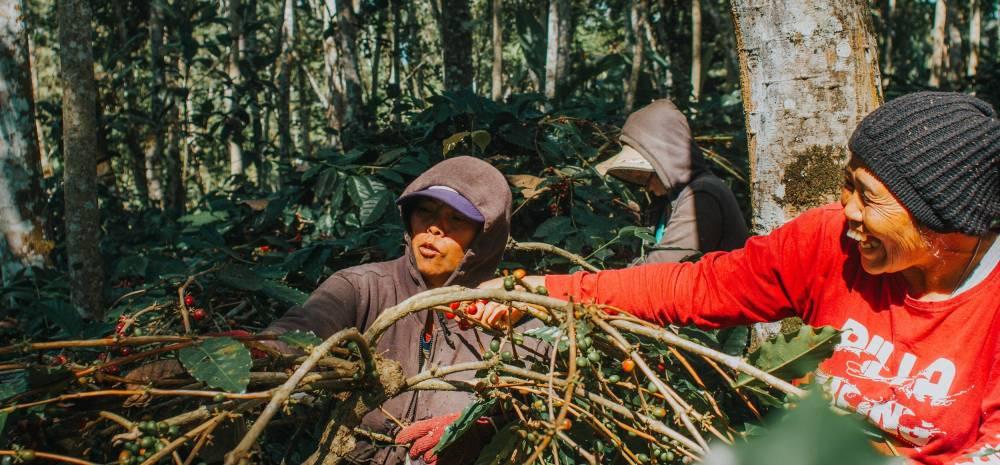 Indonesian Coffee Farmers