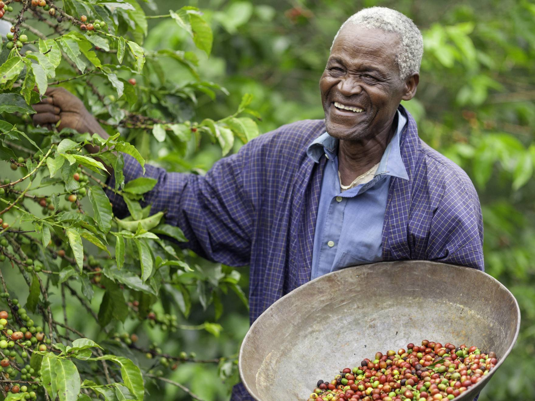 Happy coffee farmer